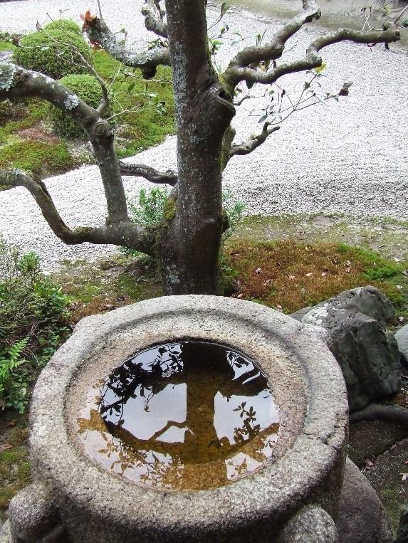 הייקו - שפירית | יפן חוויה אחרת