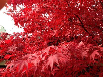 Autumn13 (113)