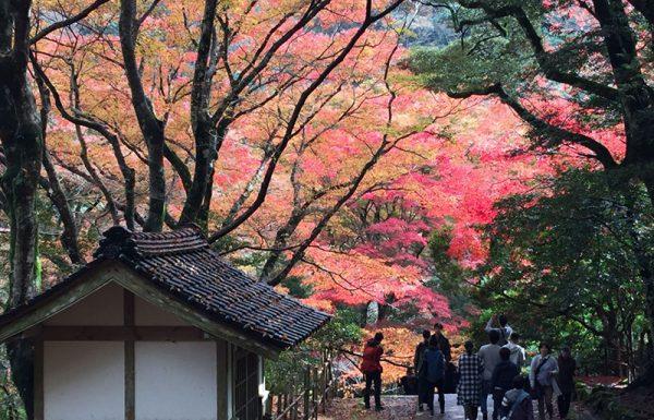 אל 'יפן האחרת' בשיא ההוויה הסתוית – טיול מאורגן ליפן | סתיו מוקדם