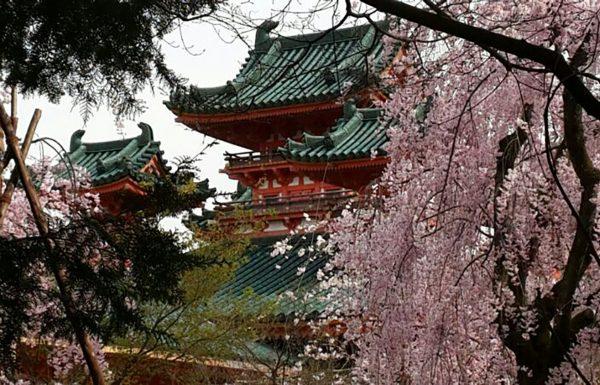 יפן – כרטיס ביקור | אילה דנון